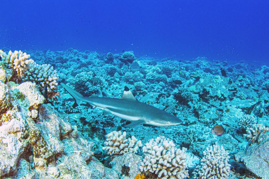 shark2Sept27-19