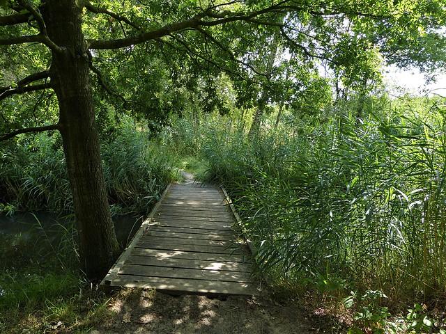 Between the reeds