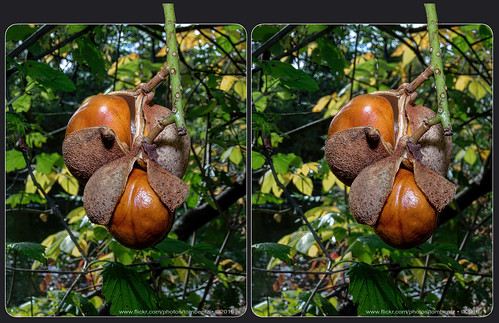 Signs of Fall 8 (Stereo)