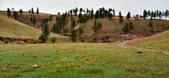 A Panoramic View to a Hillside of Trees in Wind Cave National Park