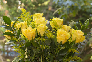 yellow roses | by Anne Davis 773