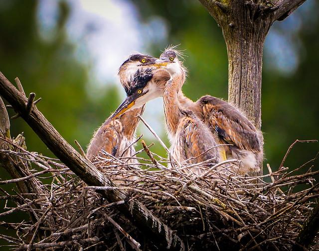3 Herons