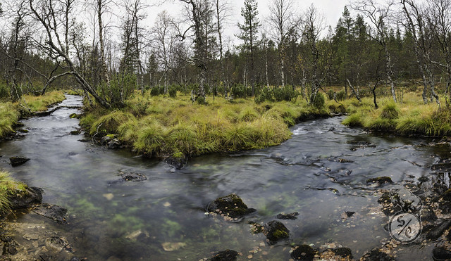 Forest stream panorama