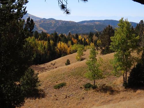 aspens fallcolors fallfoliage landscape mountains muellerstatepark colorado