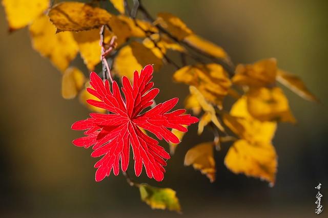 Beuatiful autumn morning...