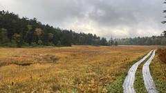 沼山峠バス停から30分ほど歩くと大江湿原に出て、尾瀬沼までこんな平坦な道が続く