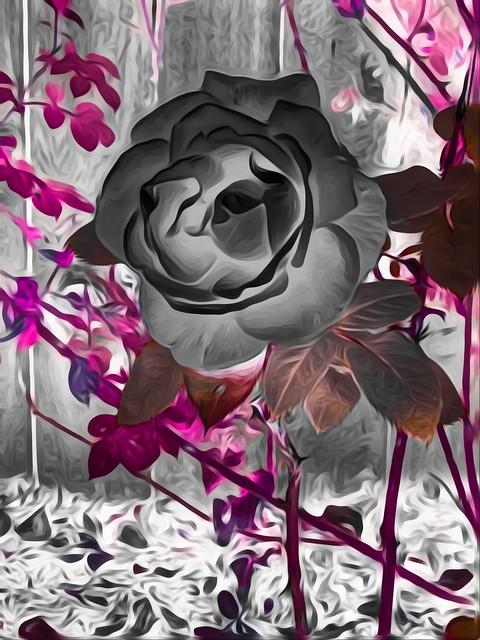 Orange rose (very highly edited)
