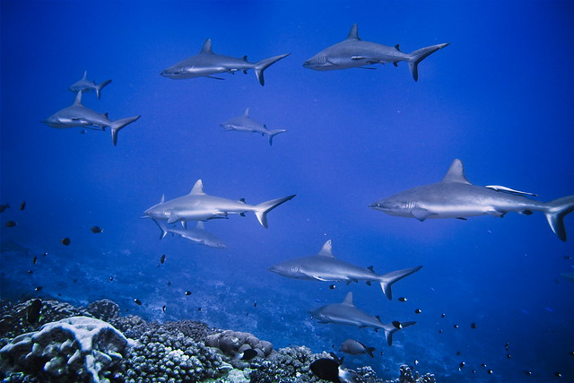 The shark wall (2)