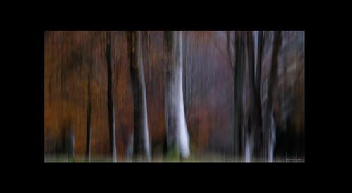Autumn Trees at Lanhydrock - DSCF5619 67