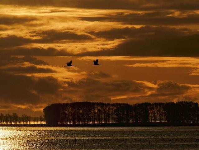 birds at sunrise VI