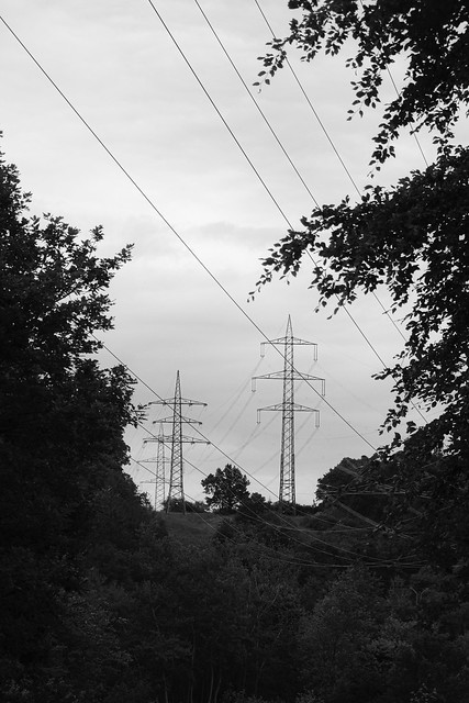 Pylons in the forest