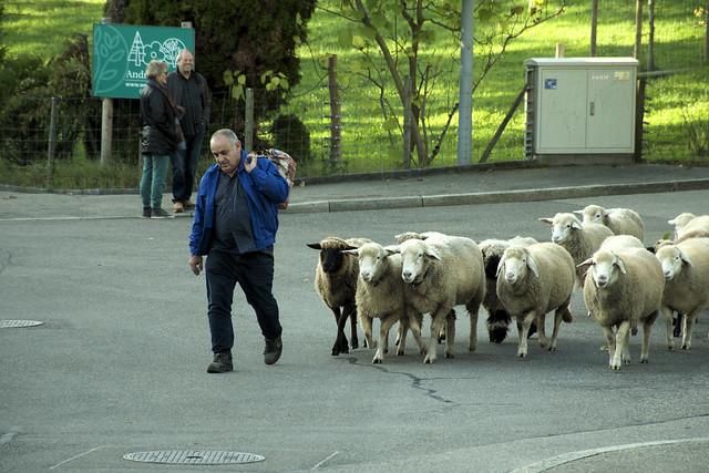 Our Town's Quadra-Pedestrians