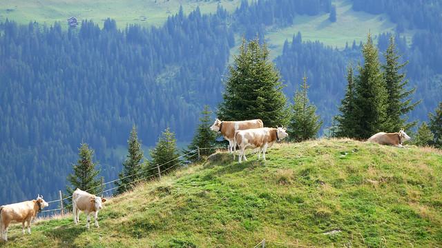Wispile bei Gstaad II
