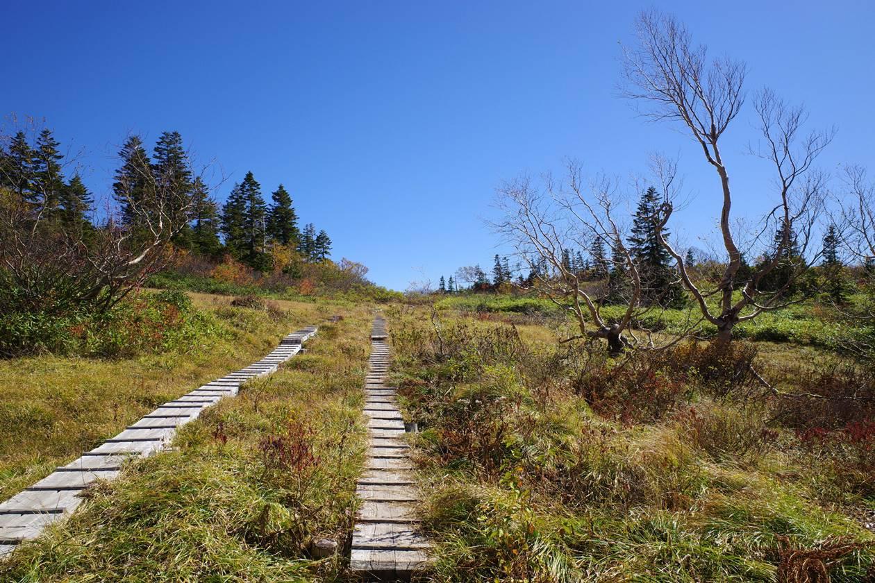 紅葉の火打山 木道の登山道