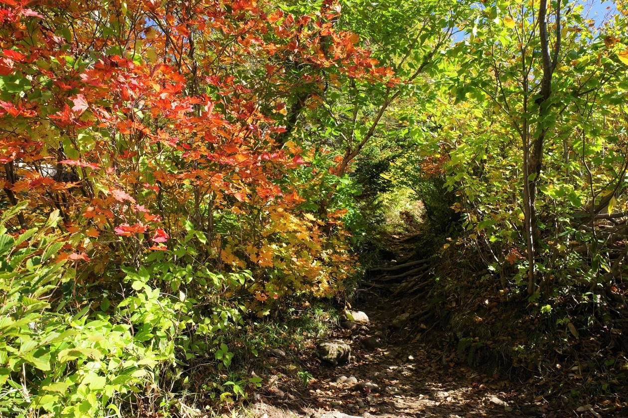 火打山登山道の紅葉
