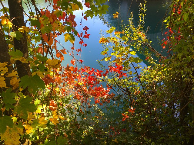 Autumn colors at the water