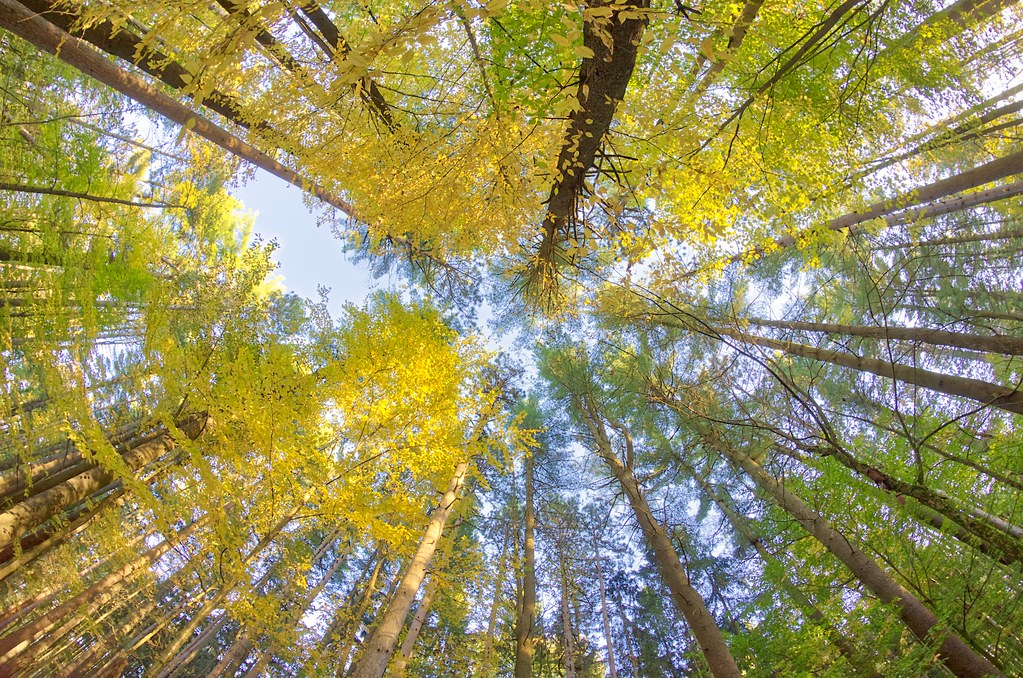 Foliage Streak