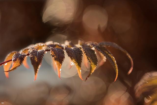 ''L'automne et sa lumière!''