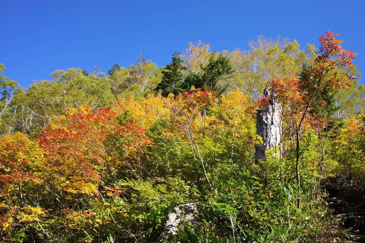 火打山の紅葉