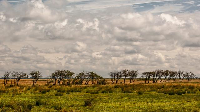 Denmarks Serengeti Shot
