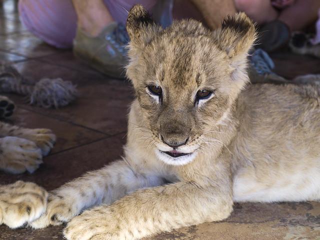 13b Kruger National Park (South Africa) -  PA 071500gr