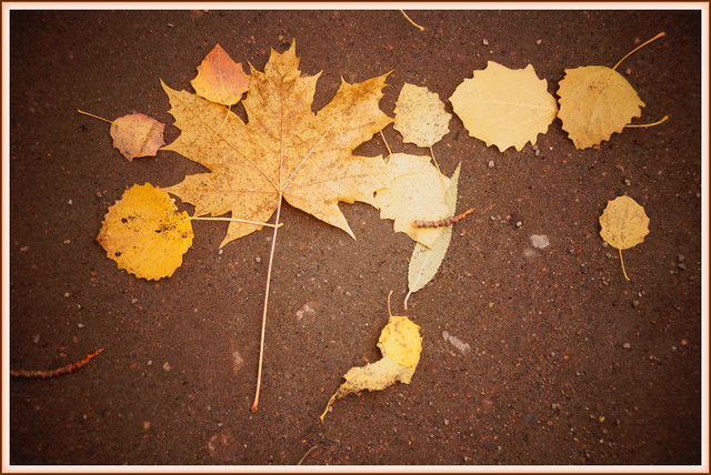 Fall's Message