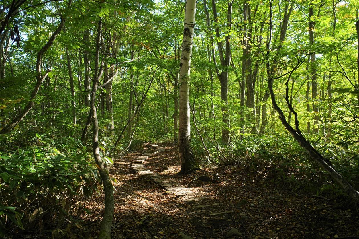 笹ヶ峰登山道の木道