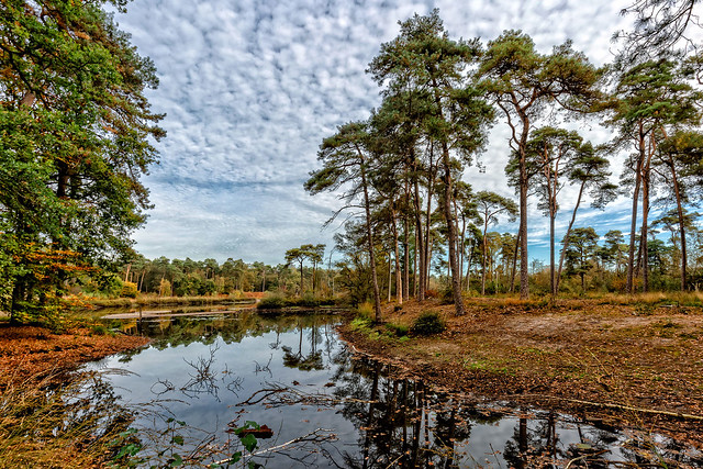 OISTERWIJK'S FORESTS & FENS