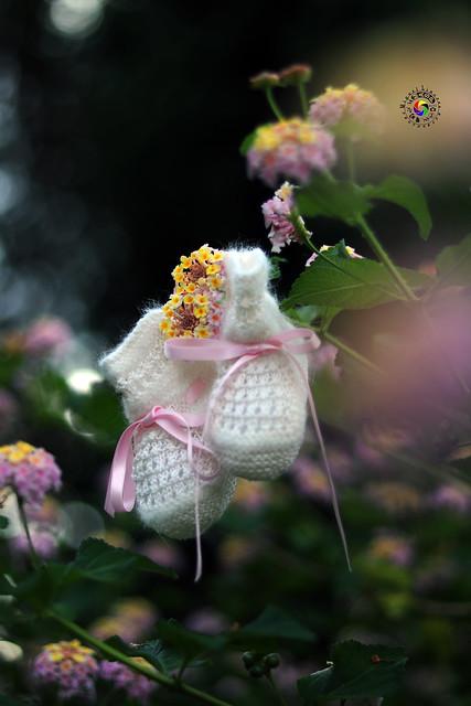 Patucos entres flores