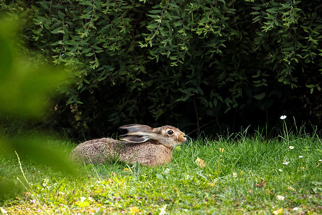Our Family Hare