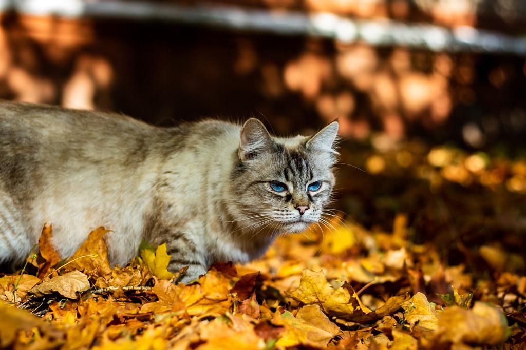 autmn cat