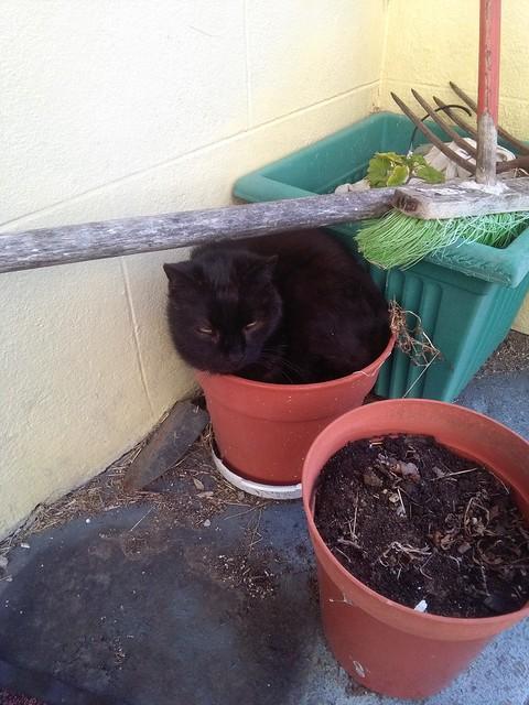 The inhabitant of the flower pot ...