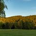 Urlaub im Schwarzwald - Tag 01 - Ankunft in Titisee