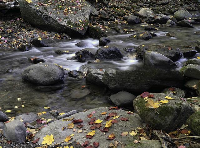 L'automne près du ruissseau