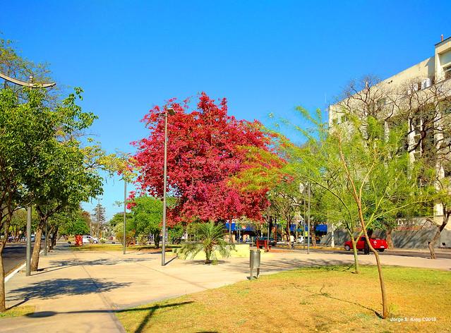 Santa Rita del árbol seco