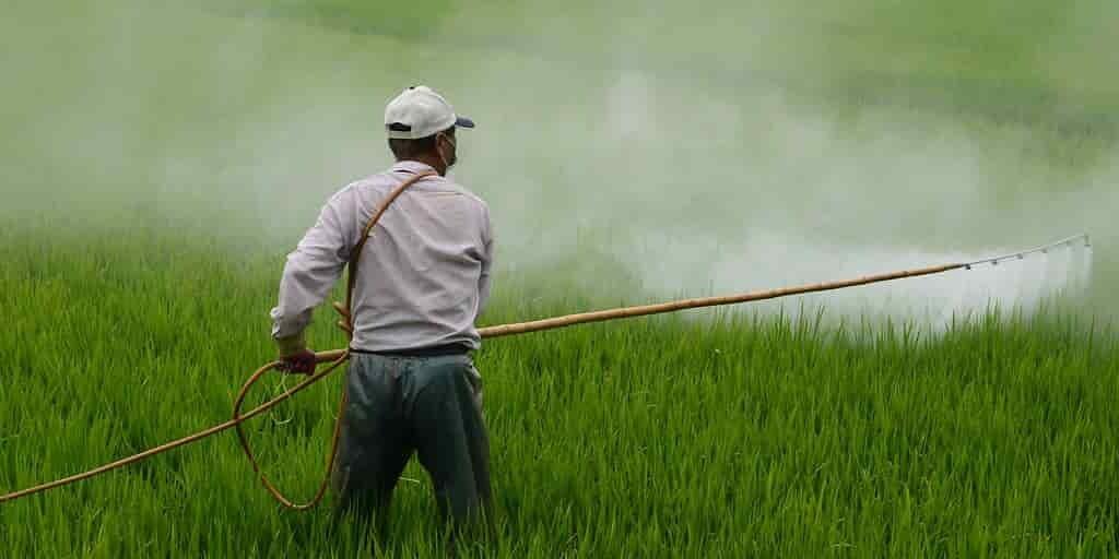 le-DFDT-un-insectice-oublié