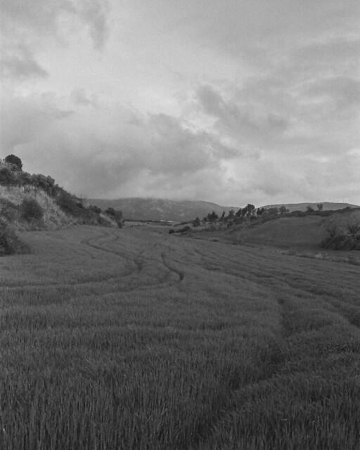 fields of spain
