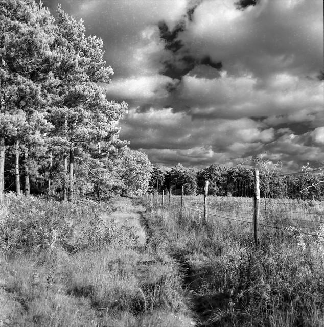 West Harling Heath ,Norfolk (Rollei IR 400).