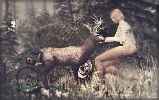 ► ﹌Rencontre en forêt.﹌ ◄