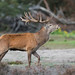 European Red Deer - Photo (c) The Wasp Factory, some rights reserved (CC BY-NC-SA)