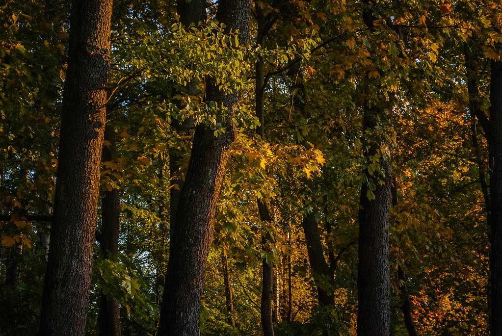 Beautiful autumn foliage 08:33:19 DSC_3832