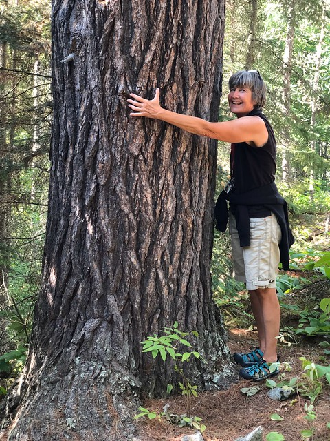 Caliper Lake - Linda found the bigest tree on our nature walk