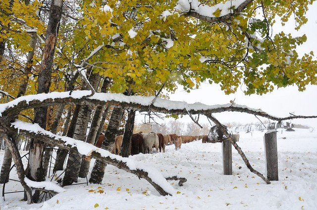 Snow-white Autumn!
