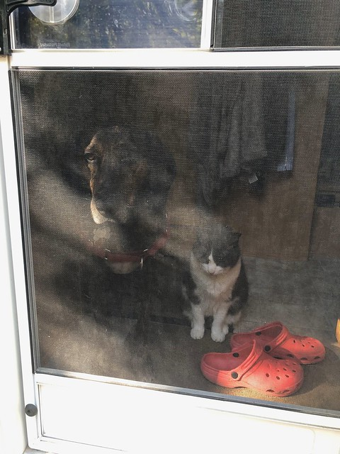 Turtle Mountain - Hector and Puck looking out the door together