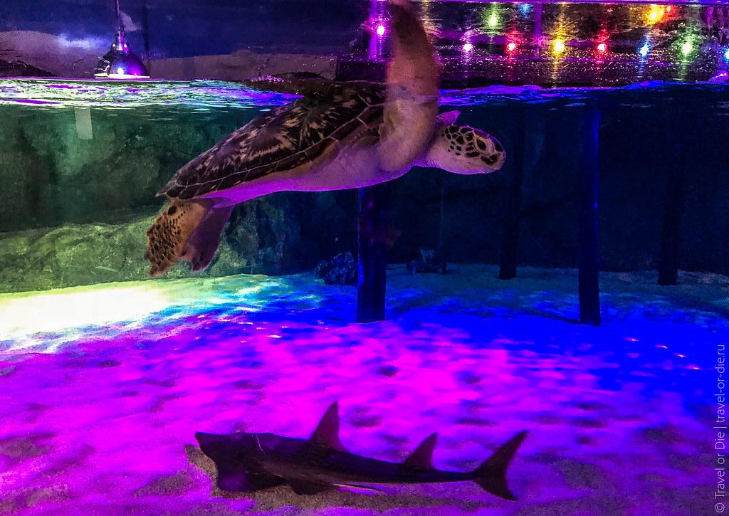SEA-LIFE-Bangkok-Ocean-World-9342