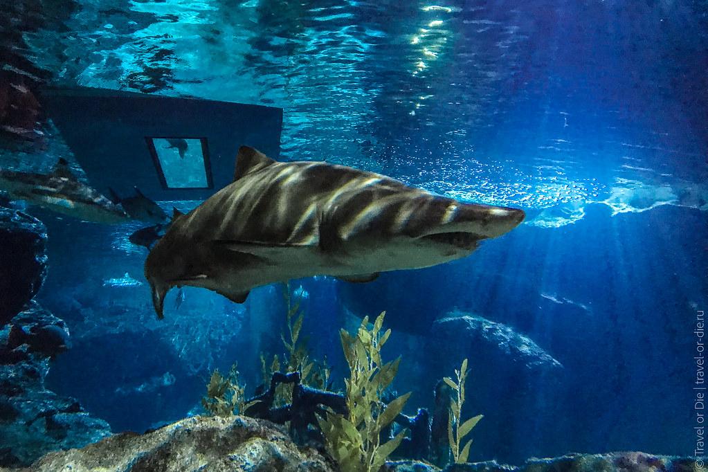 рохлевый скат фото в океанариум того, можете