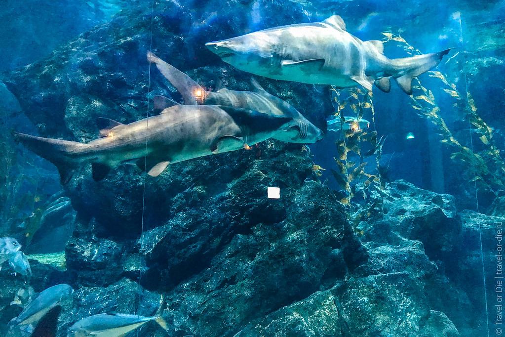SEA-LIFE-Bangkok-Ocean-World-9408