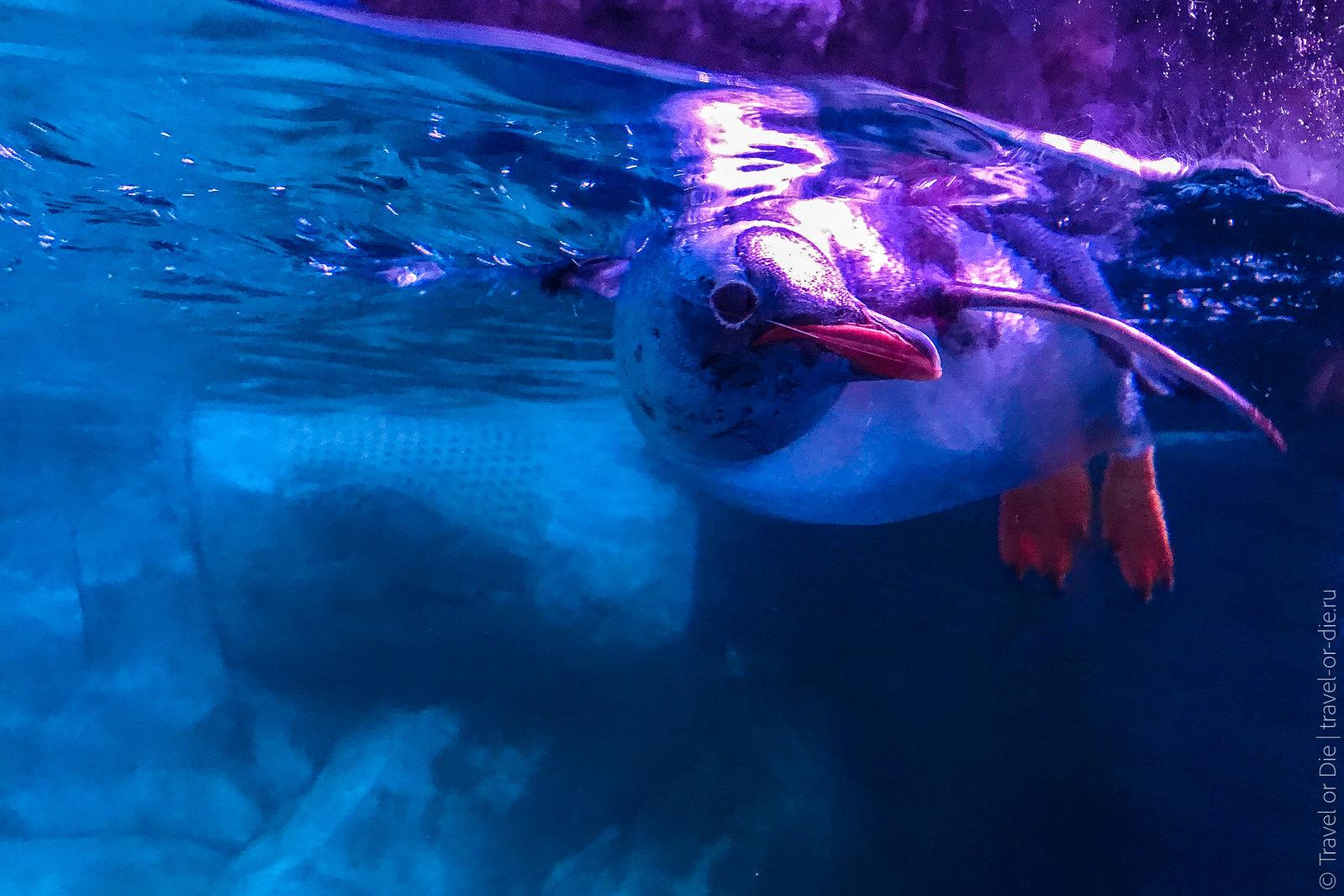 SEA-LIFE-Bangkok-Ocean-World-9490