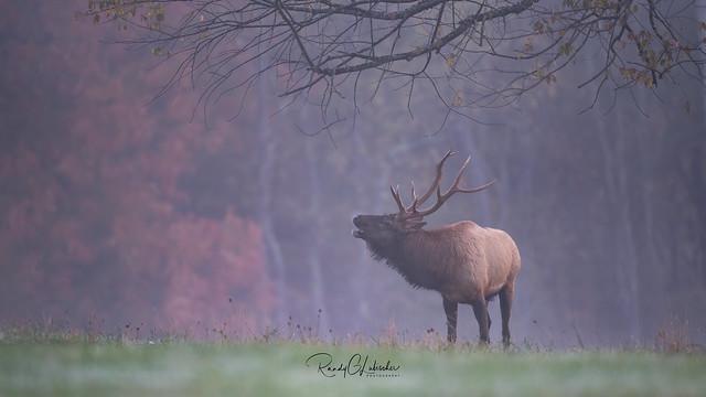 Elk of Benezette | 2019 - 23
