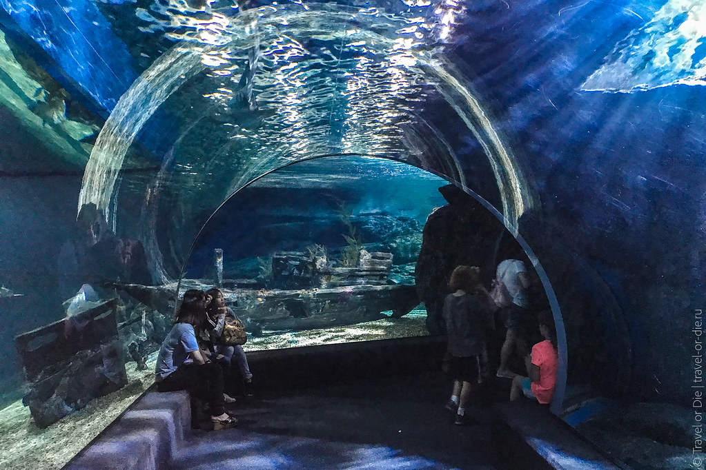 SEA-LIFE-Bangkok-Ocean-World-9373